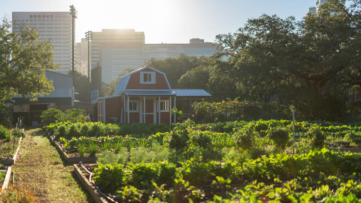 Picture of the holistic garden, with a small red shed in the background.